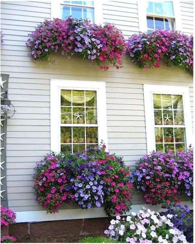 Petunia garden 8