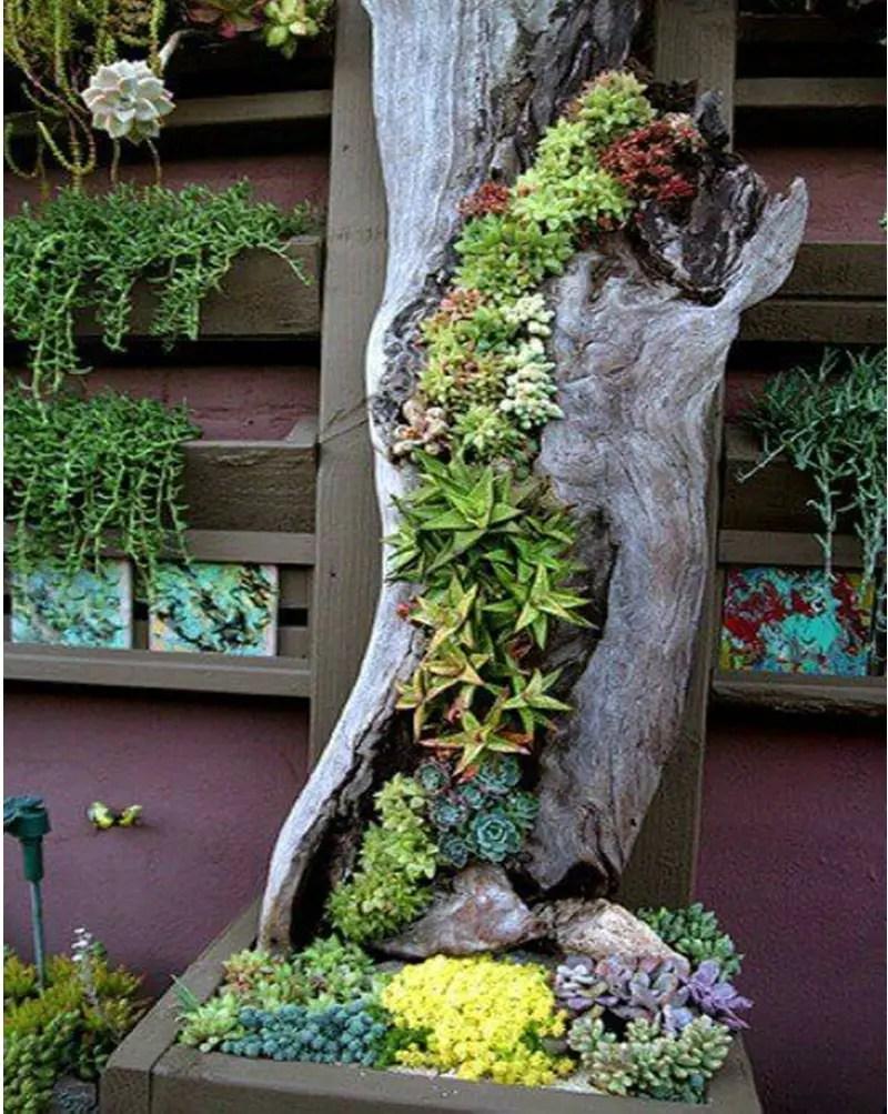 Succulents garden ideas 1