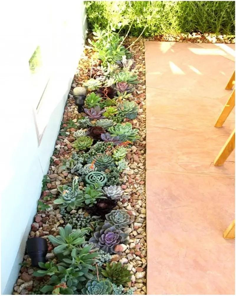 Succulents garden ideas 2