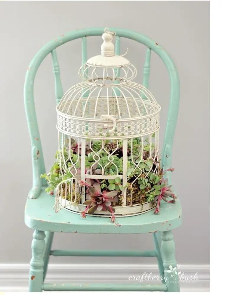 Succulents garden ideas 3