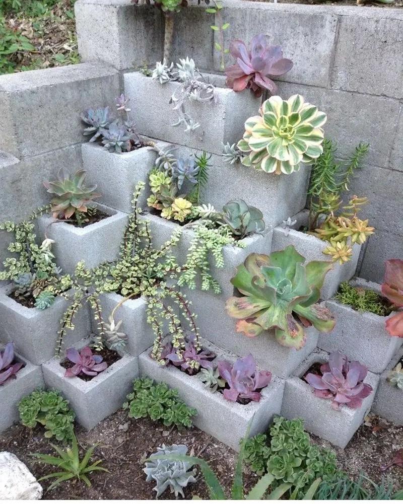 Succulents garden ideas 4