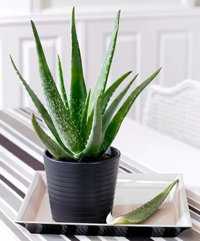 Bedroom plants 2