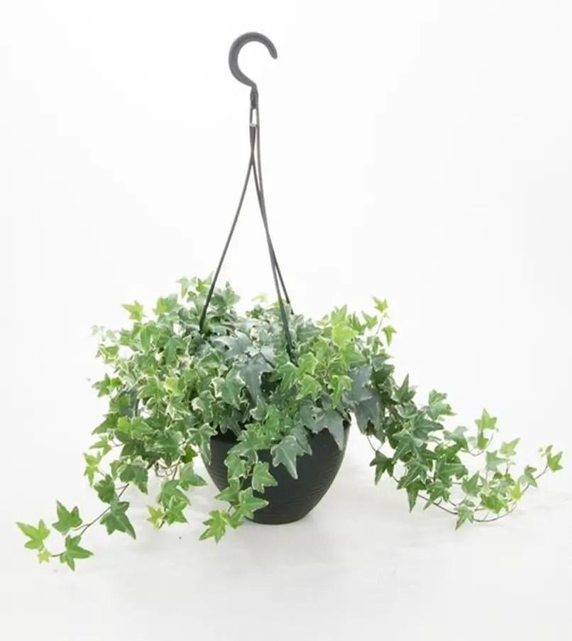 Bedroom plants 5