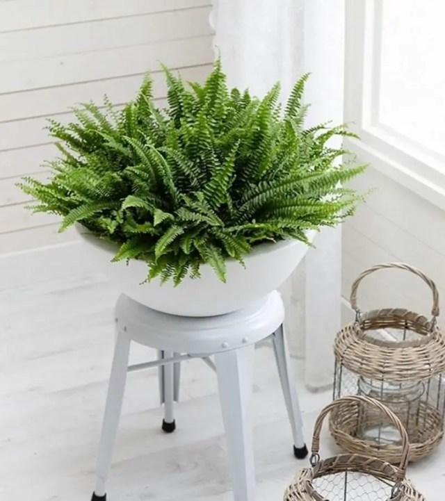Bedroom plants 6