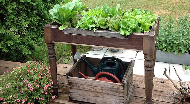 Diy lettuce table