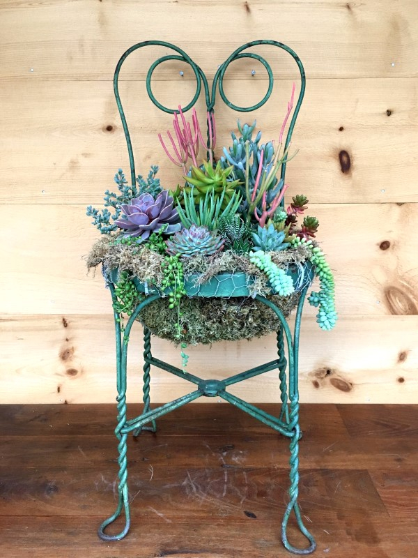 Succulent chair planter