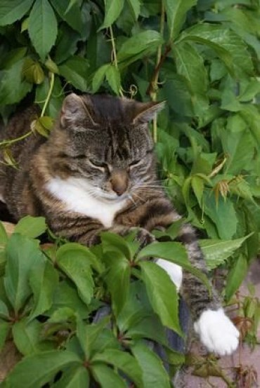 Awesome houseplants that are safe for animals 07