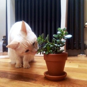 Awesome houseplants that are safe for animals 08