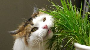 Awesome houseplants that are safe for animals 09