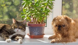 Awesome houseplants that are safe for animals 12