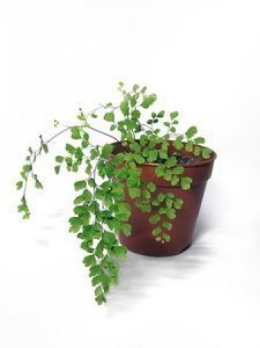 Awesome houseplants that are safe for animals 16