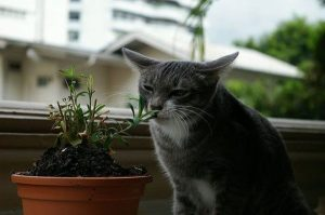 Awesome houseplants that are safe for animals 19