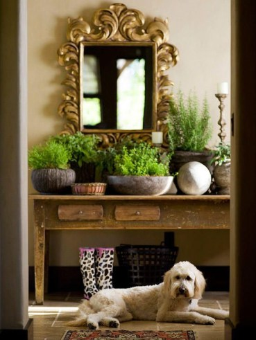 Awesome houseplants that are safe for animals 20