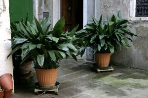 Awesome houseplants that are safe for animals 24