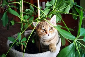 Awesome houseplants that are safe for animals 25
