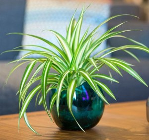 Awesome houseplants that are safe for animals 28