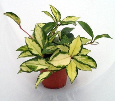 Awesome houseplants that are safe for animals 41