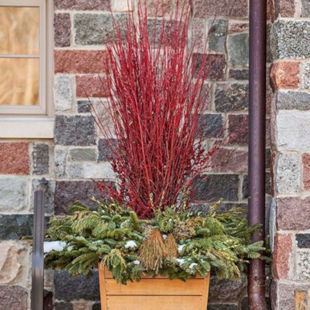 Colorful winter planters for your outdoor decorations 31