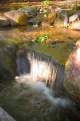 Design a fish pond garden with a waterfall concept 08