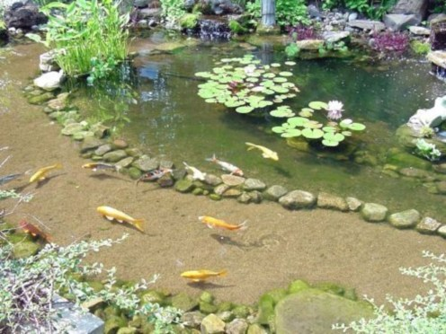 Design a fish pond garden with a waterfall concept 39