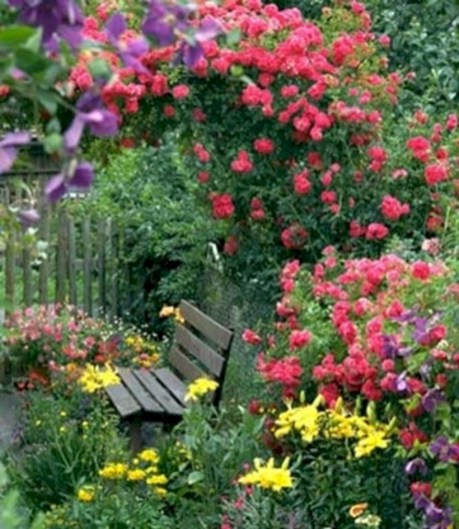 Amazing rose garden ideas in this year 01