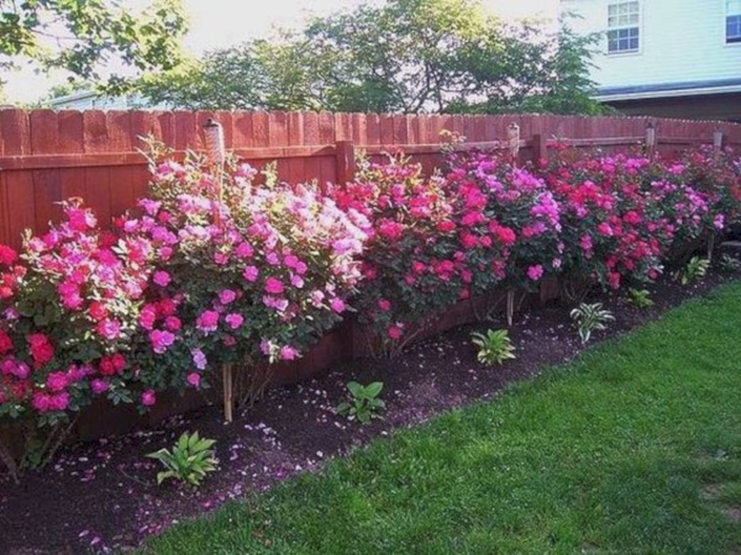 Amazing rose garden ideas in this year 06