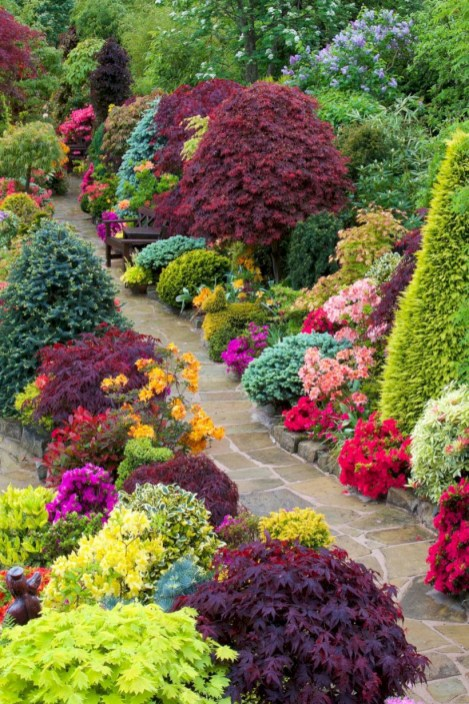 Amazing rose garden ideas in this year 18