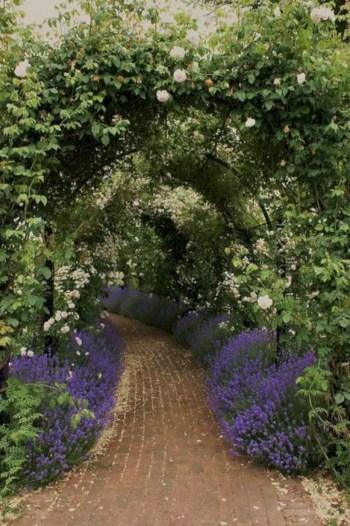Amazing rose garden ideas in this year 19