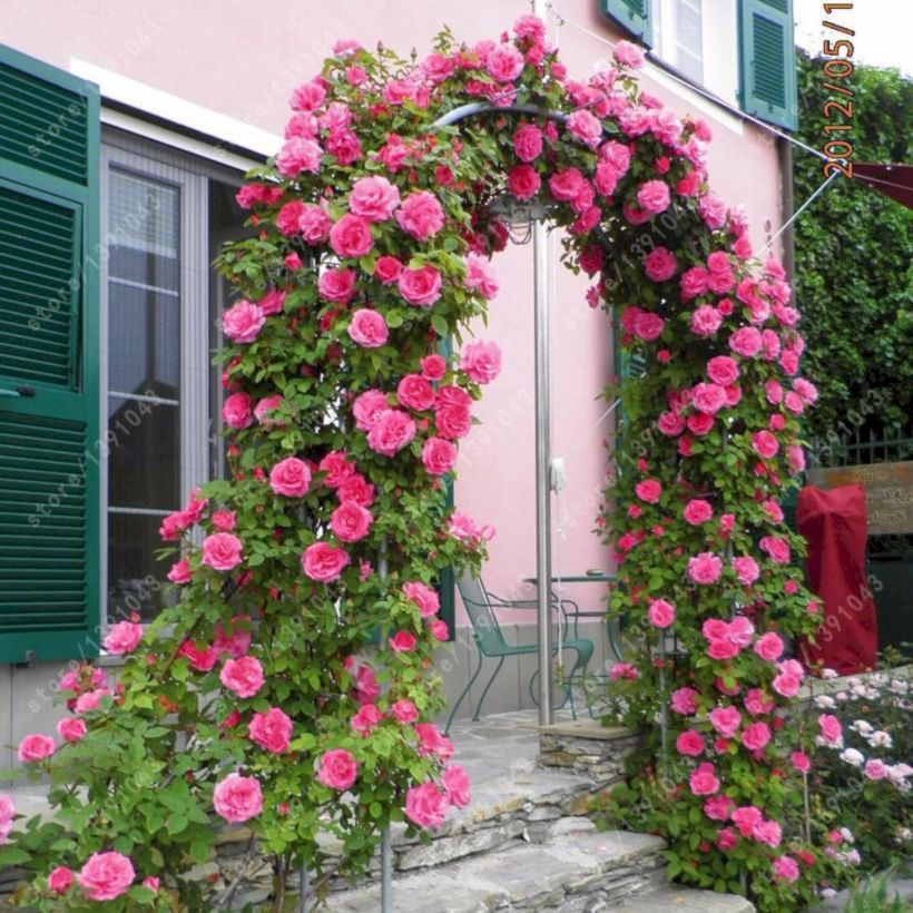 Amazing rose garden ideas in this year 36