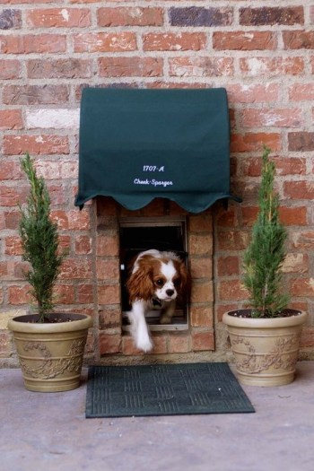 Home design ideas for your pet at home 22