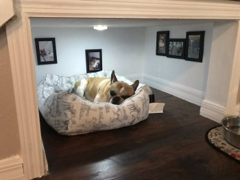 Home design ideas for your pet at home 27
