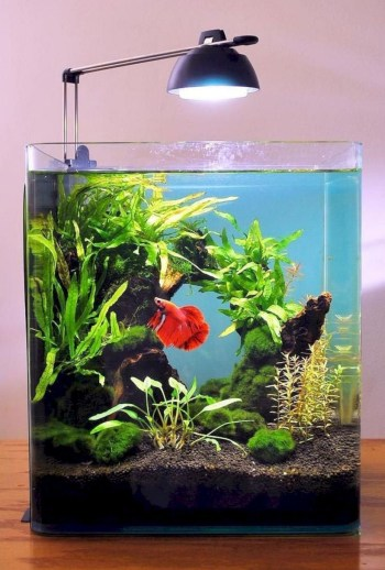 Aquarium design ideas that make your home look beauty 12