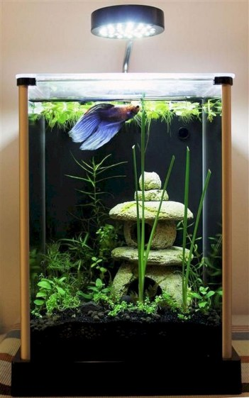 Aquarium design ideas that make your home look beauty 17