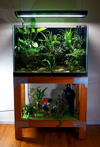 Aquarium design ideas that make your home look beauty 18