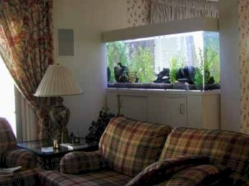 Aquarium design ideas that make your home look beauty 45