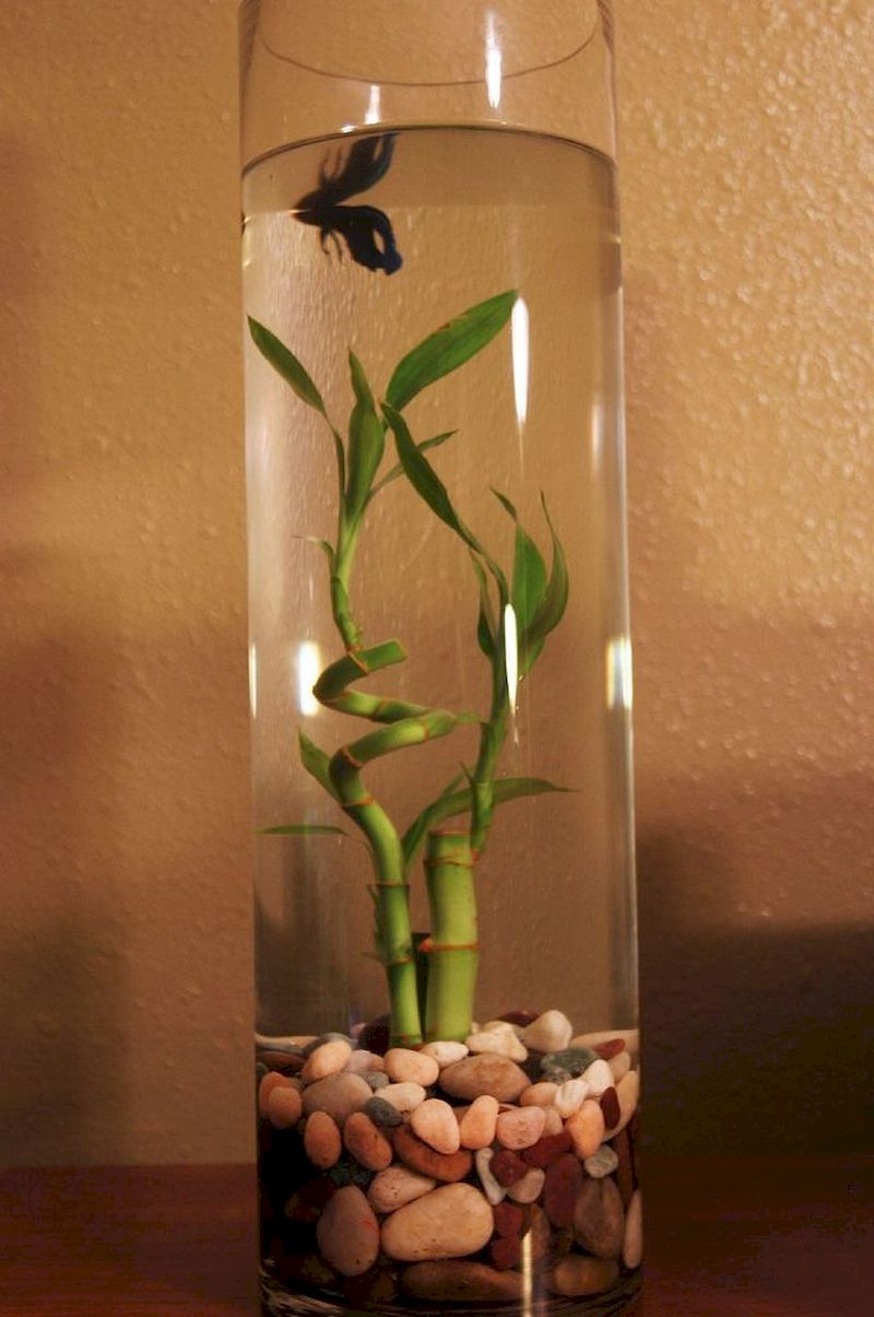 Indoor water garden ideas that fresh your room 02