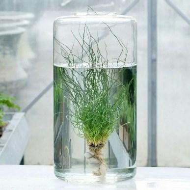 Indoor water garden ideas that fresh your room 09