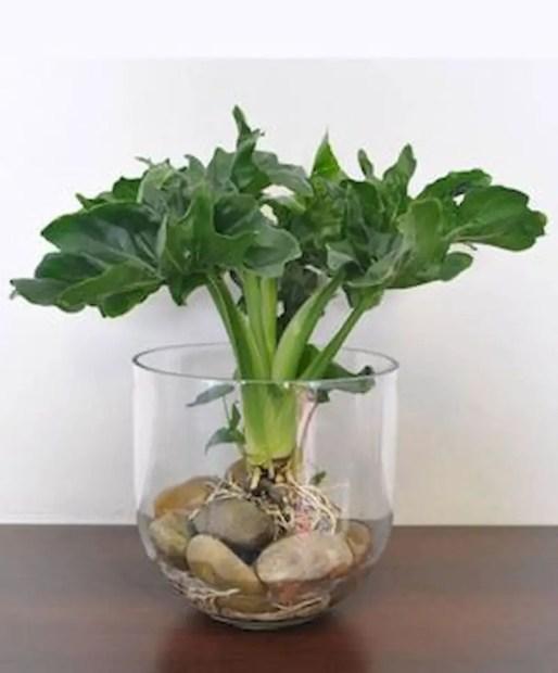 Indoor water garden ideas that fresh your room 30