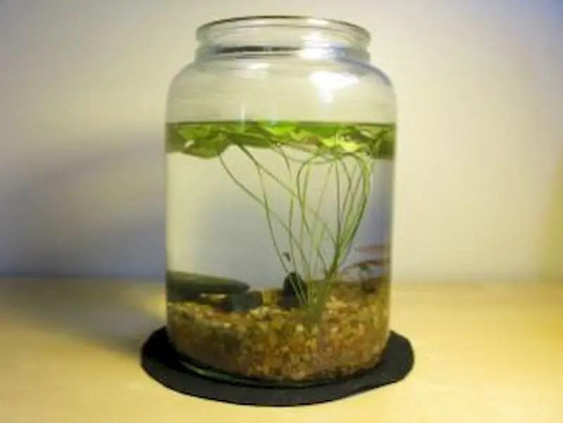 Indoor water garden ideas that fresh your room 49