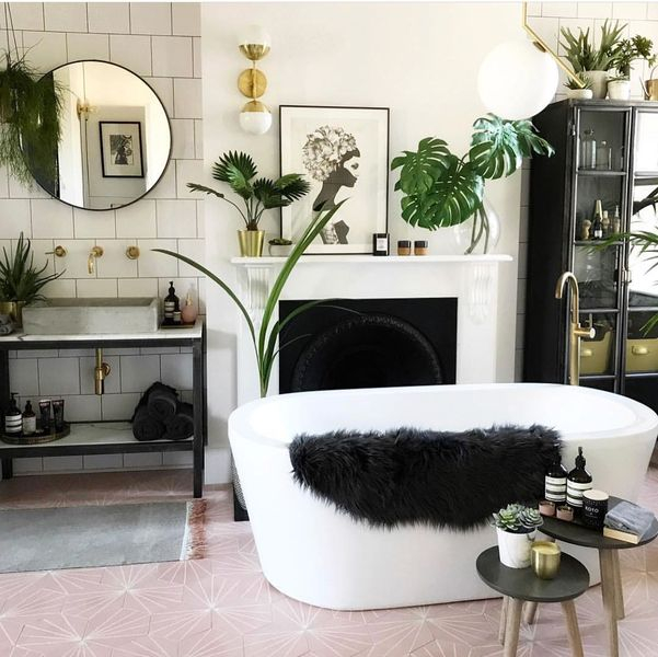 An awesome house plants to perfect your bathroom