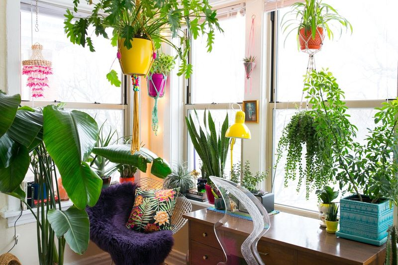 Houseplants to perfect your home office