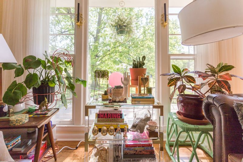 Beautiful houseplants for the space