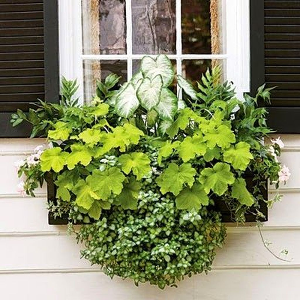 An amazing window greenery