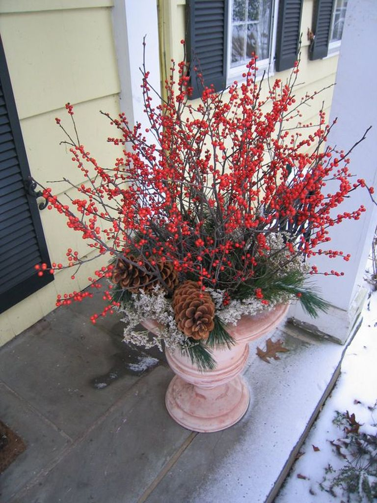 An awesome plants combined with red flowers