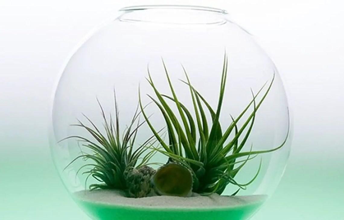 Diy terrarium centerpiece to planter succulent for your table decoration