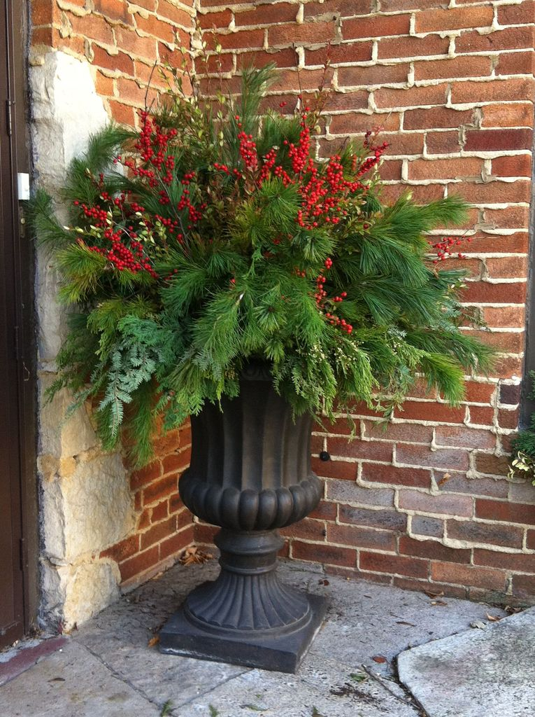 Houseplants for outdoor decoration