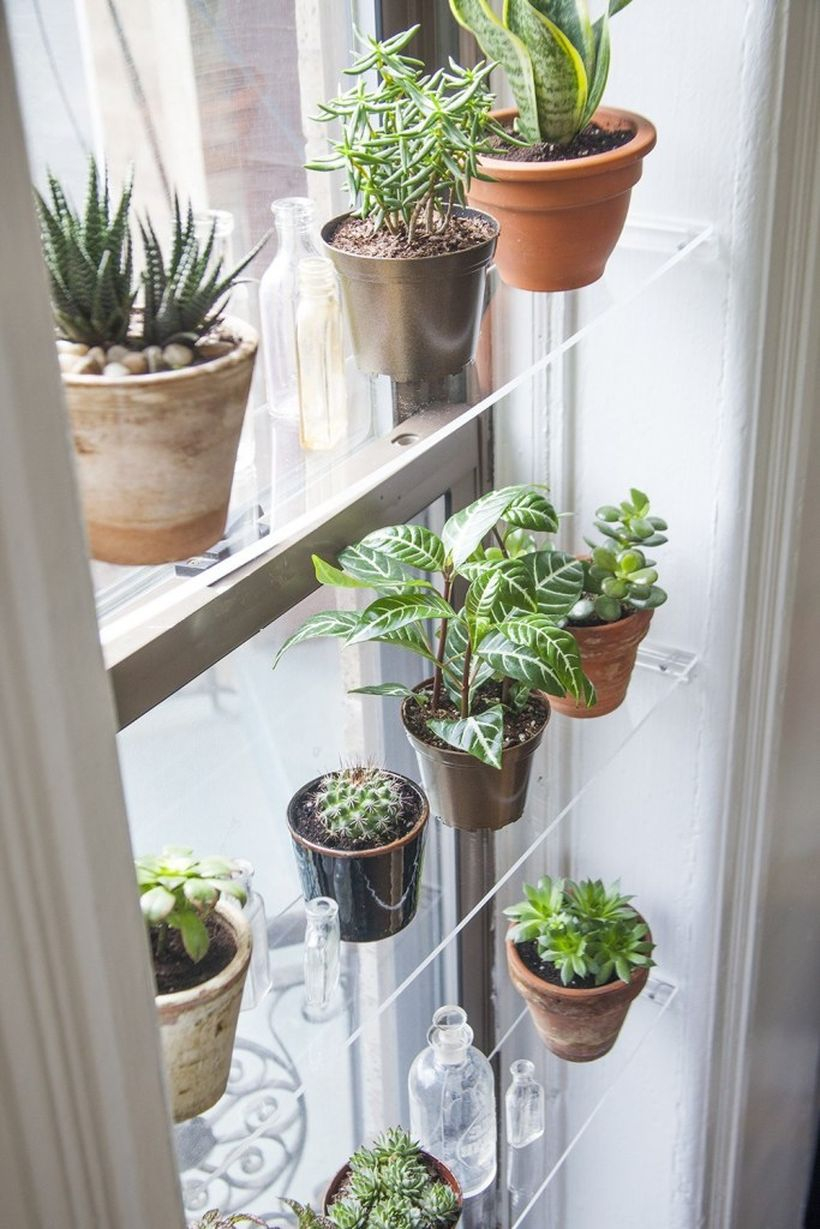 Modern glass rack placement succulent ideas with awesome decoration