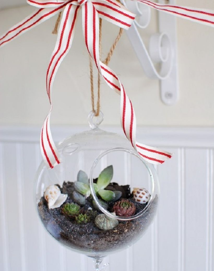 Arrangment succulents and plant them inside a hanging glass globe for your home decoration