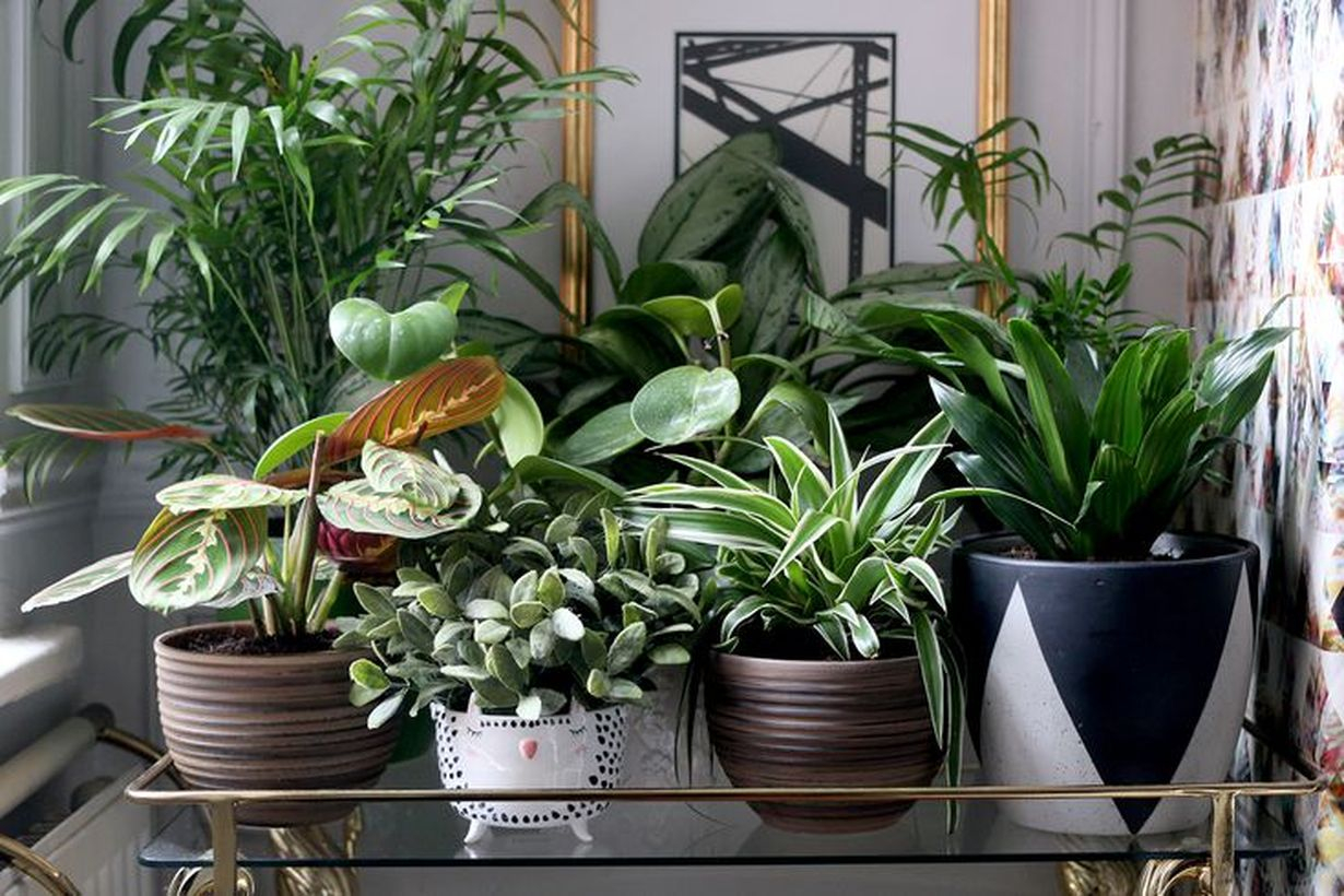 Awesome arrangement greenery for decoration balcony you must try
