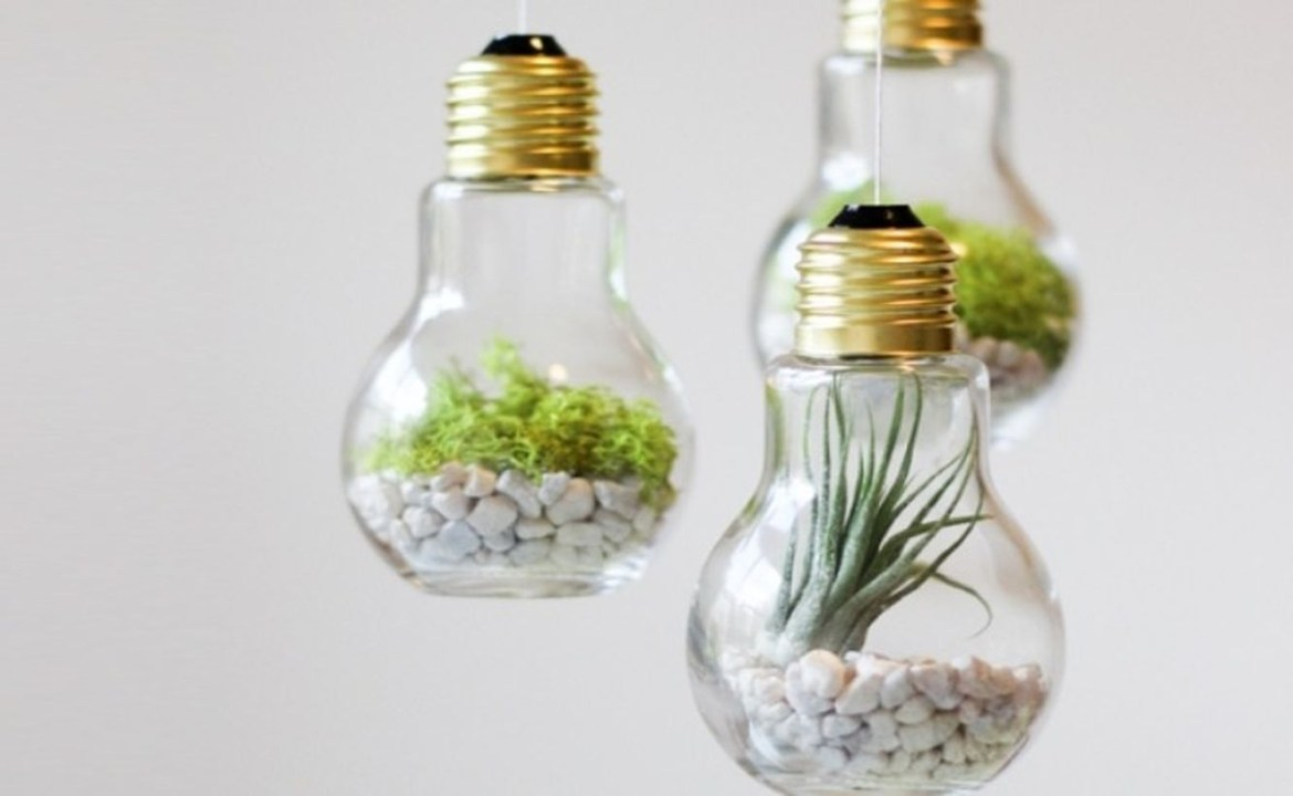 Creative terrarium designs from light bulbs former for your home decoration